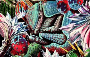 armadillocactusrock-cover