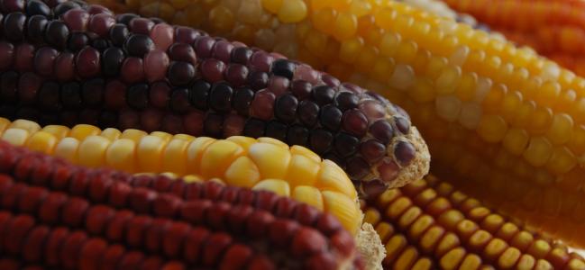 Evitemos una crisis alimentaria en nuestro país.