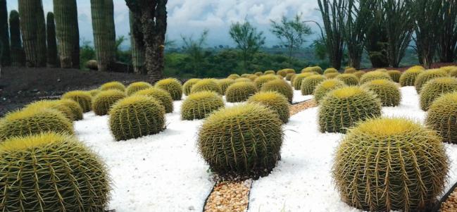 Con polen alas de vida inauguran jardines de m xico for Jardines pequenos mexicanos