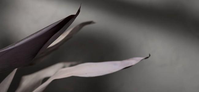 Jueves independiente: 'Silence', de Pale.